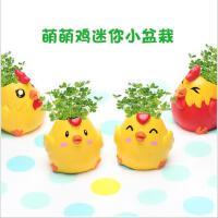 创意办公室迷你桌面绿植物小盆栽时尚萌萌鸡DIY摆件盆景