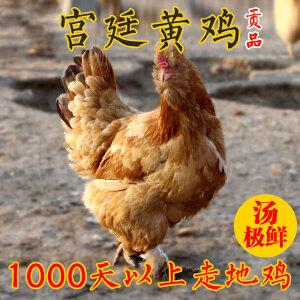 【北京特产】密农人家 正宗农家散养土鸡 新鲜走地老母鸡 北京油鸡柴鸡2-3斤