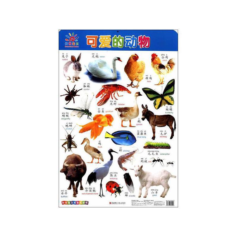 可爱的动物 青岛出版社