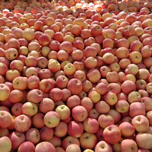 【沂蒙馆】   新鲜水果中庄沂源红富士苹果 80果10斤装