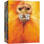 野生动物大发现-捕猎、战斗、合作、炫耀、伪装、防御(套装共6册)